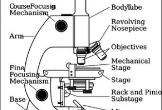 Il microscopio, una storia lunga duemila anni