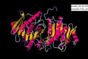 Caratterizzazione della sequenza proteica della proteina PdxK di Klebsiella Pneumoniae