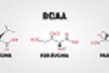 BCCA & Co per lo Sport