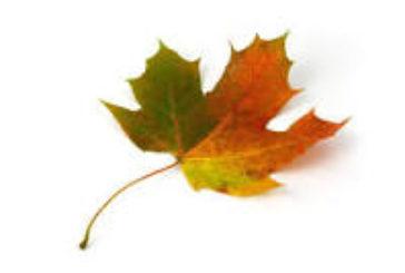 Credo che gli uomini siano foglie che non rispettano i tronchi. (A.Einstein)