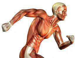 Malattie dei Muscoli