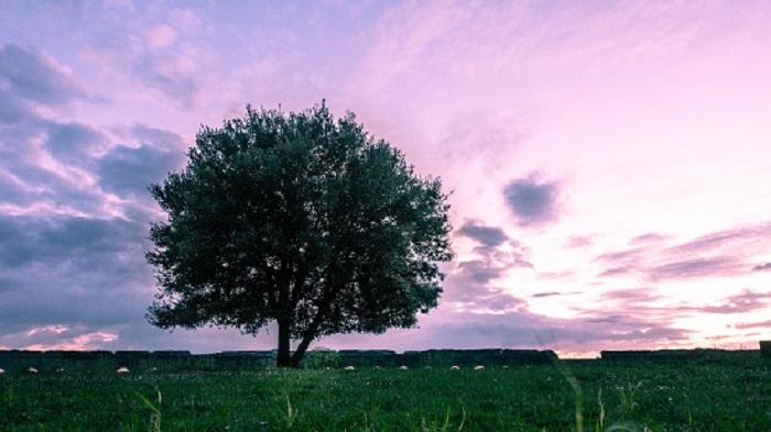 SEI.Panorama_al_parco